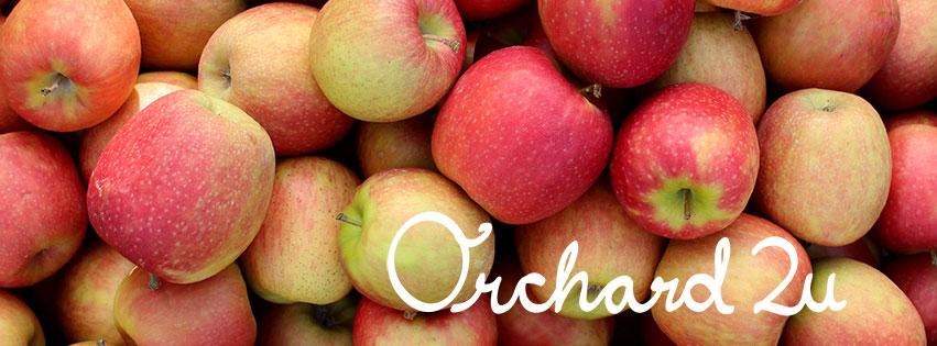 apples - Rieschiecks orchards apples